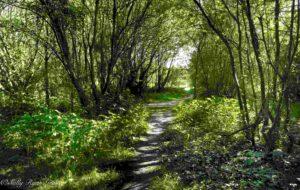 Slievethoul and Lugg walk